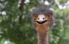 http://www.vchauphotography.com/wp-content/uploads/2012/01/ostrich-pine-mountains.jpg