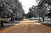 http://www.vchauphotography.com/wp-content/uploads/2012/02/DSC-Green1.jpg