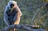http://www.vchauphotography.com/wp-content/uploads/2012/04/baboon-corbett.jpg