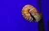 http://www.vchauphotography.com/wp-content/uploads/2013/08/Sea-Snail-Salon.jpg